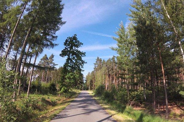 Aktivita In-line trasa v Hradeckých městských lesích